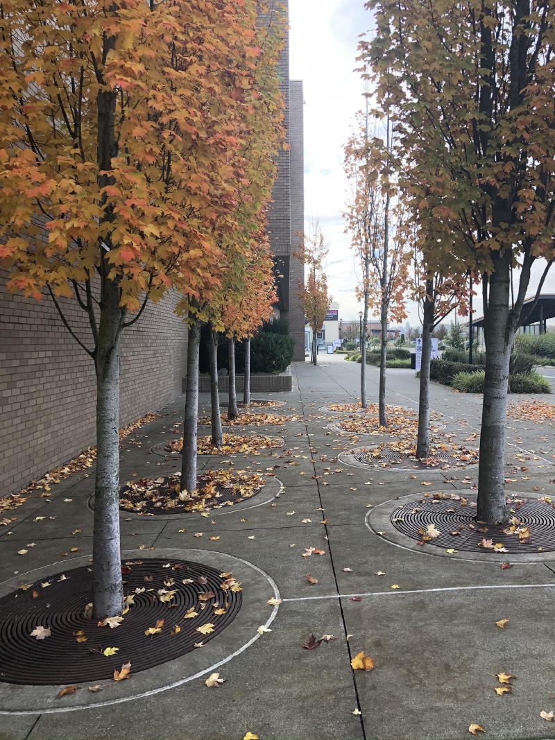 trees etc